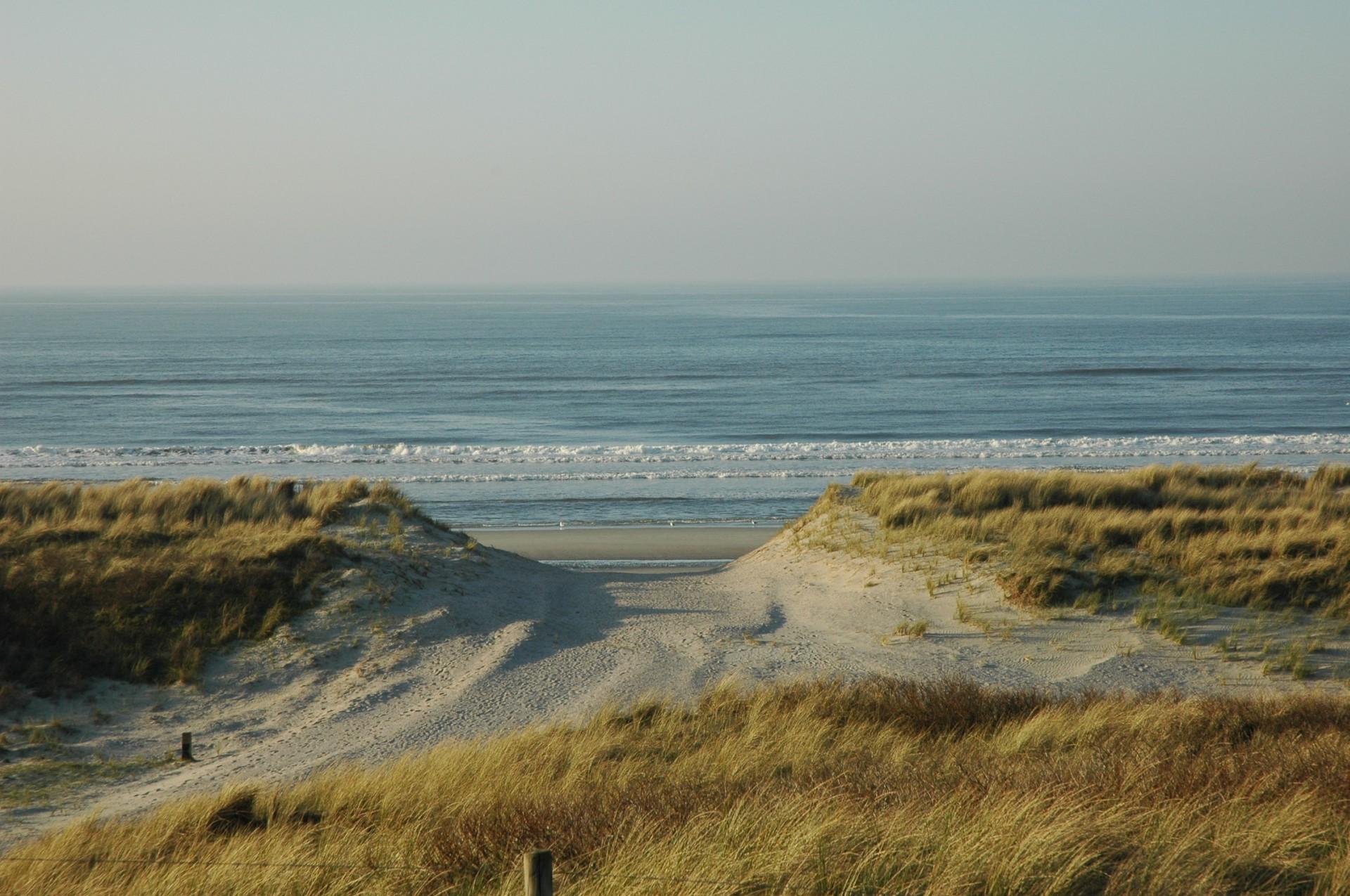 strand surfen